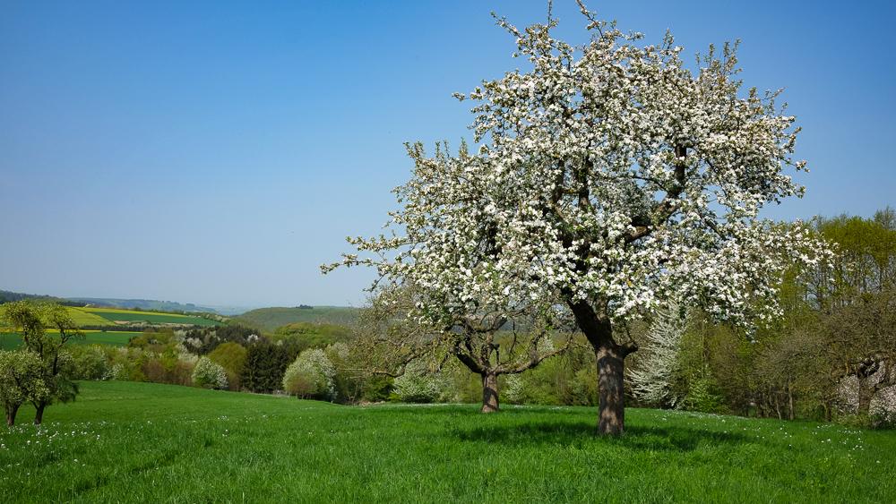 Frühling im Hunsrück