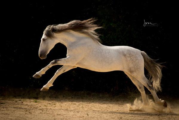 pferdefotografie-julia-moll