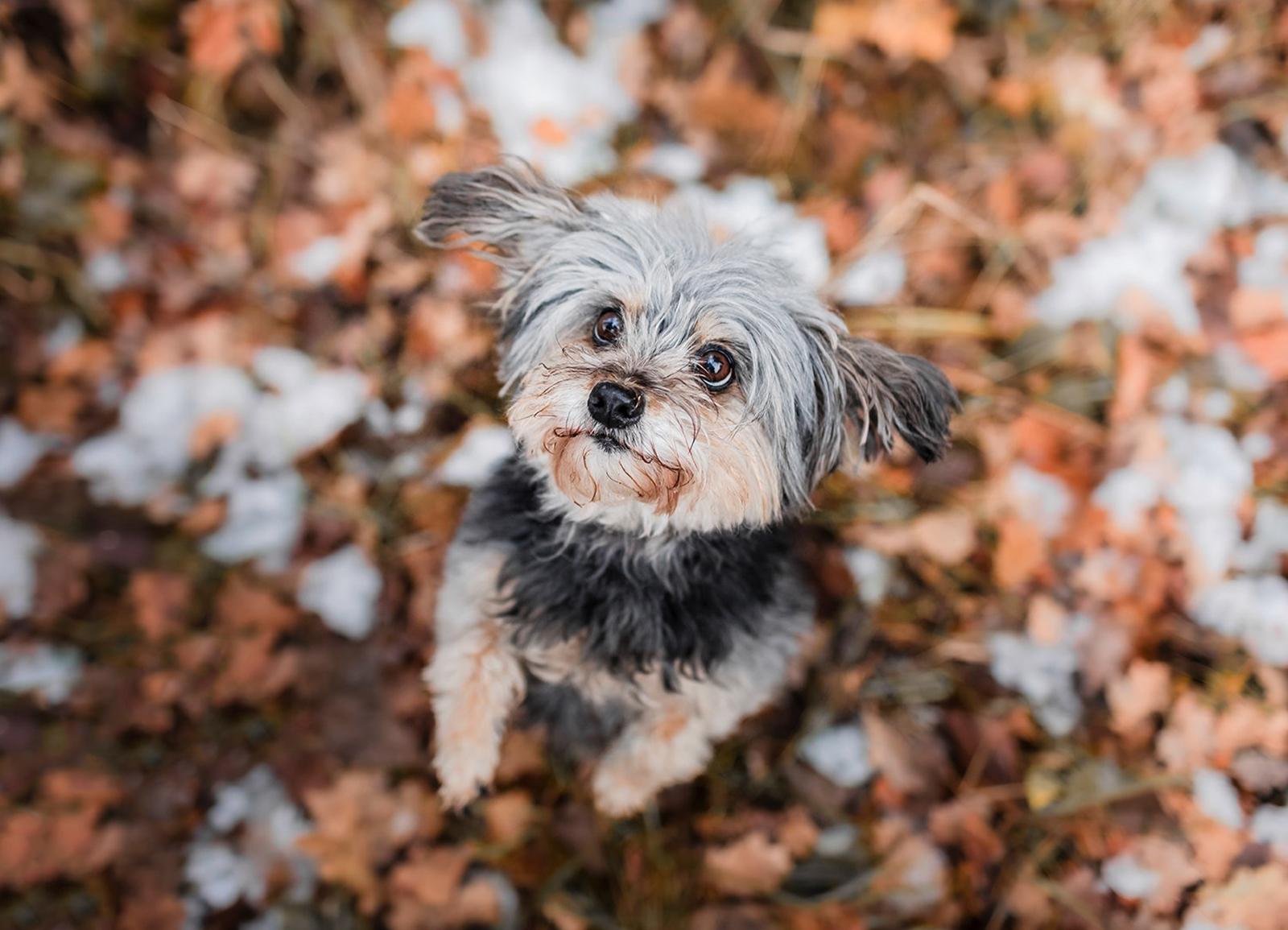 Hundefotografie: 3 Natürliche Posen, die mit jedem Hund gelingen - Tierfotografie